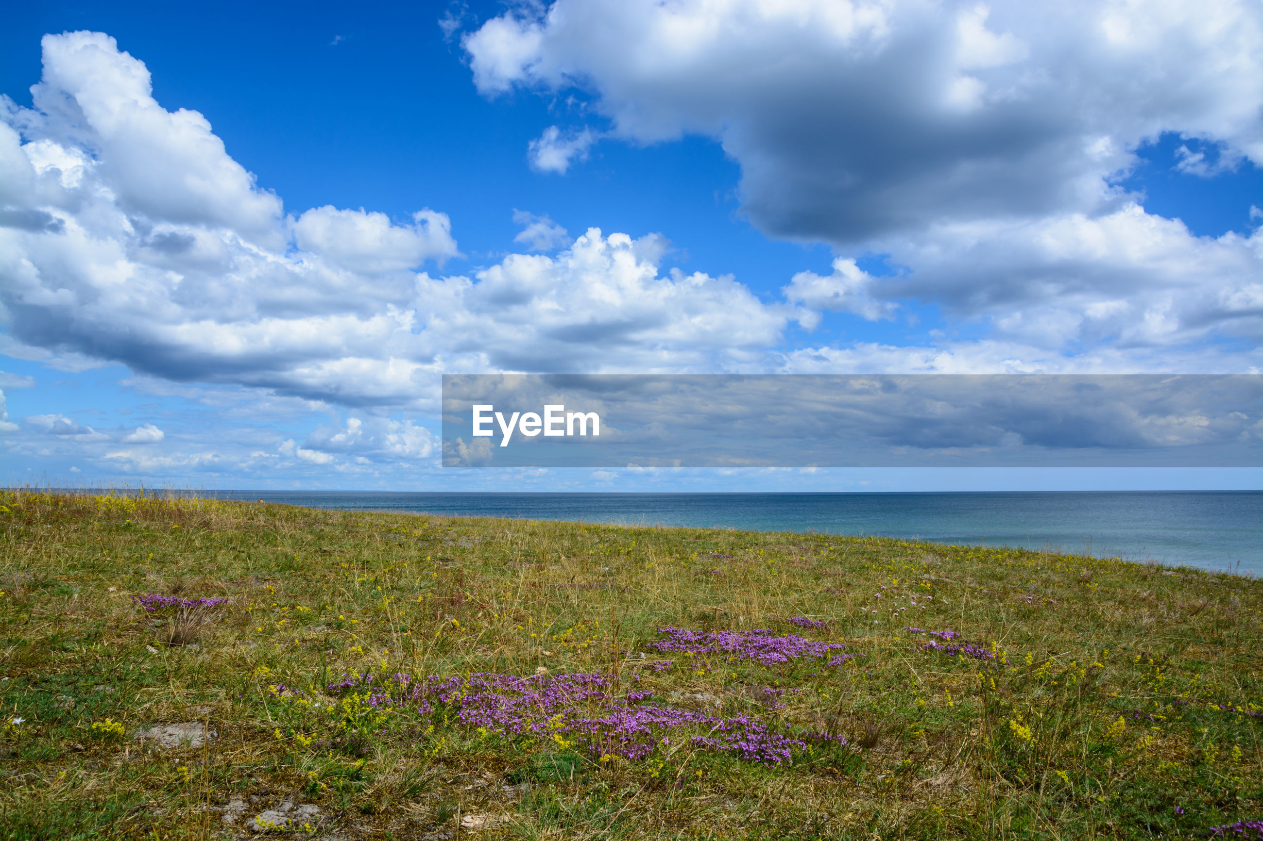 SCENIC VIEW OF SEA BY FIELD AGAINST SKY
