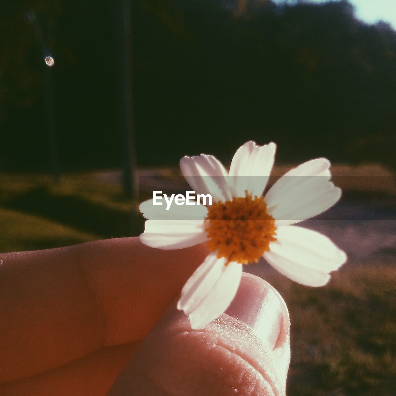 human hand, human body part, flower, one person, human finger, nature, real people, personal perspective, focus on foreground, fragility, petal, close-up, beauty in nature, outdoors, holding, flower head, day, freshness, sky, people