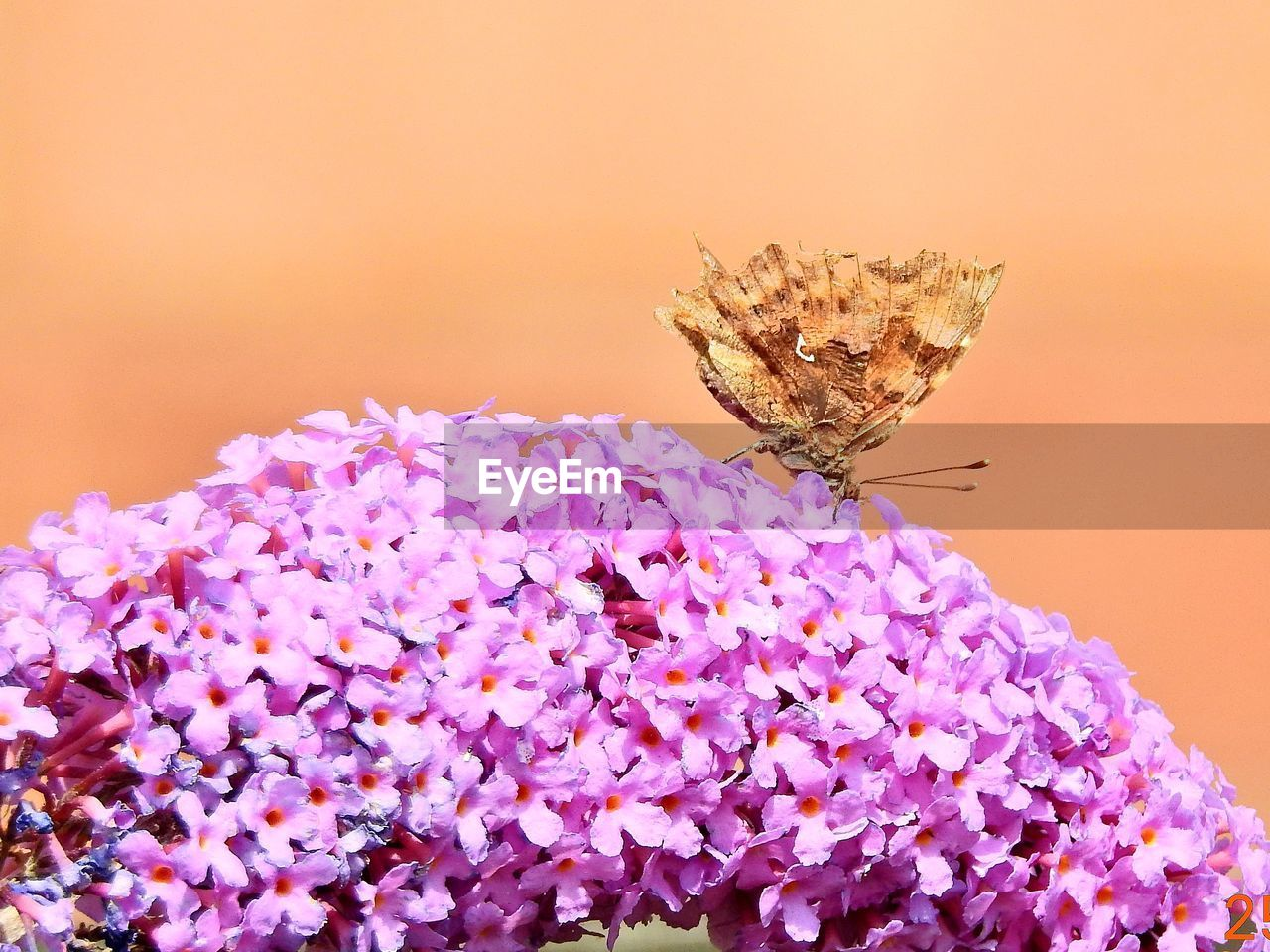 fragility, insect, flower, one animal, nature, animal themes, purple, animals in the wild, close-up, no people, beauty in nature, petal, plant, animal wildlife, freshness, flower head, outdoors, day