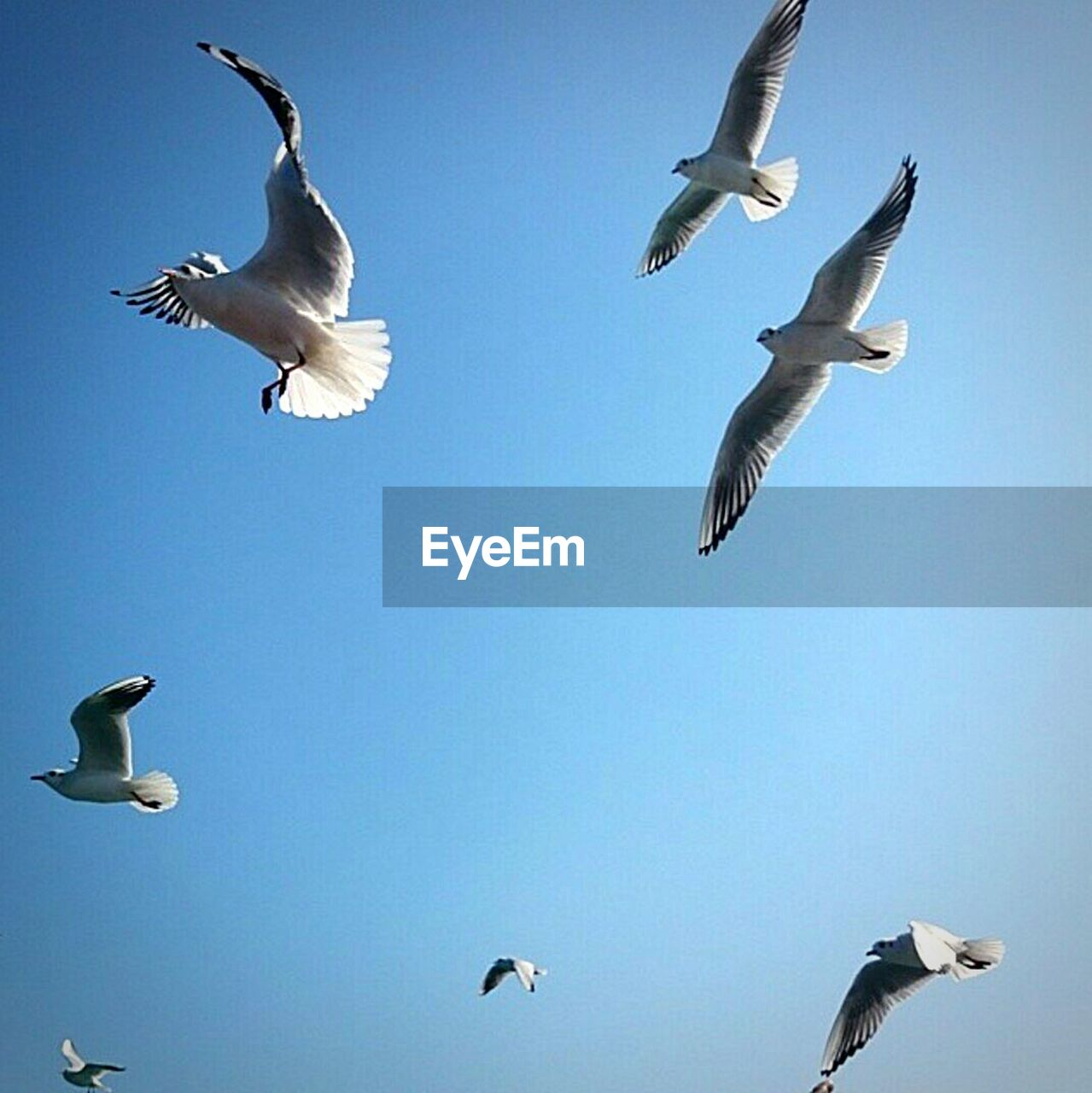Low Angle View Of Seagulls Against Clear Sky On Sunny Day