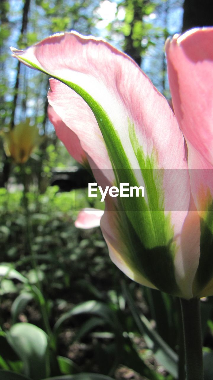 flower, growth, petal, nature, beauty in nature, fragility, freshness, plant, flower head, close-up, blooming, no people, day, outdoors, leaf