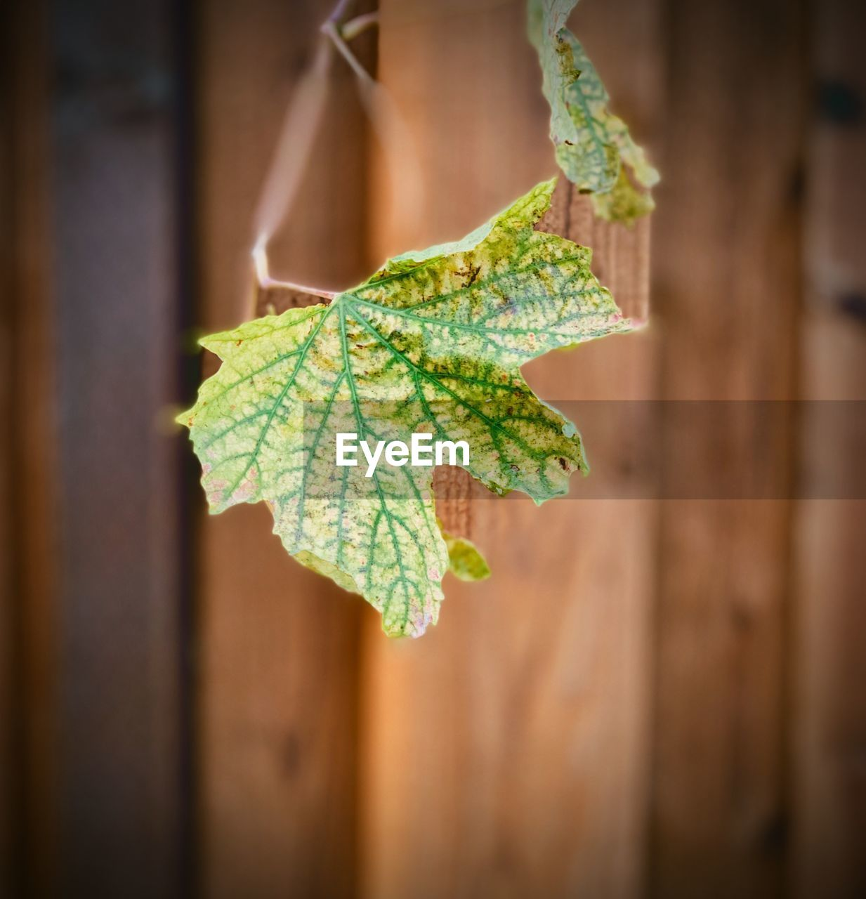 plant part, leaf, green color, close-up, focus on foreground, no people, plant, day, growth, nature, outdoors, selective focus, wood - material, beauty in nature, leaf vein, vulnerability, fragility, leaves, brown, pattern