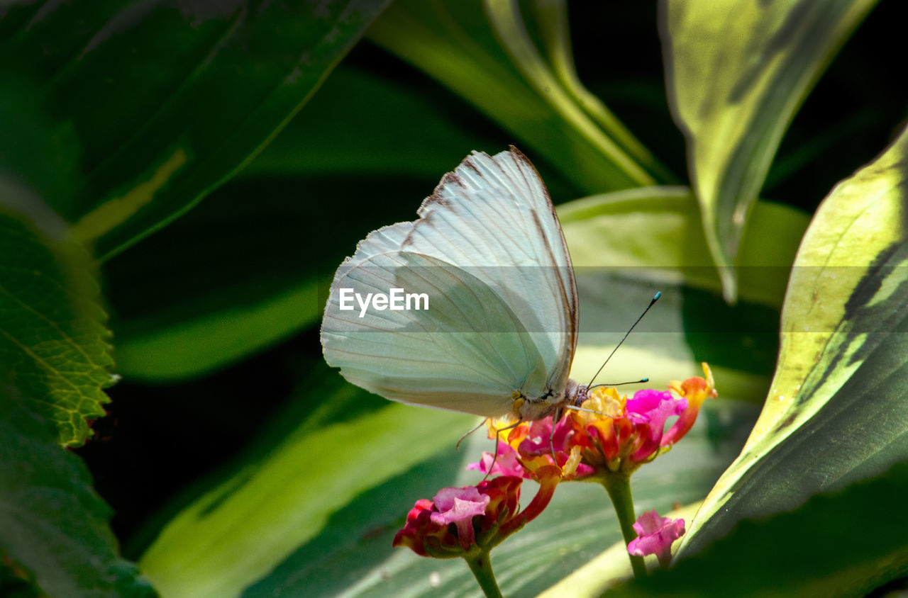 flower, plant, flowering plant, beauty in nature, fragility, vulnerability, freshness, growth, close-up, petal, flower head, nature, no people, inflorescence, plant part, day, leaf, animals in the wild, green color, animal wildlife, pollen, butterfly - insect