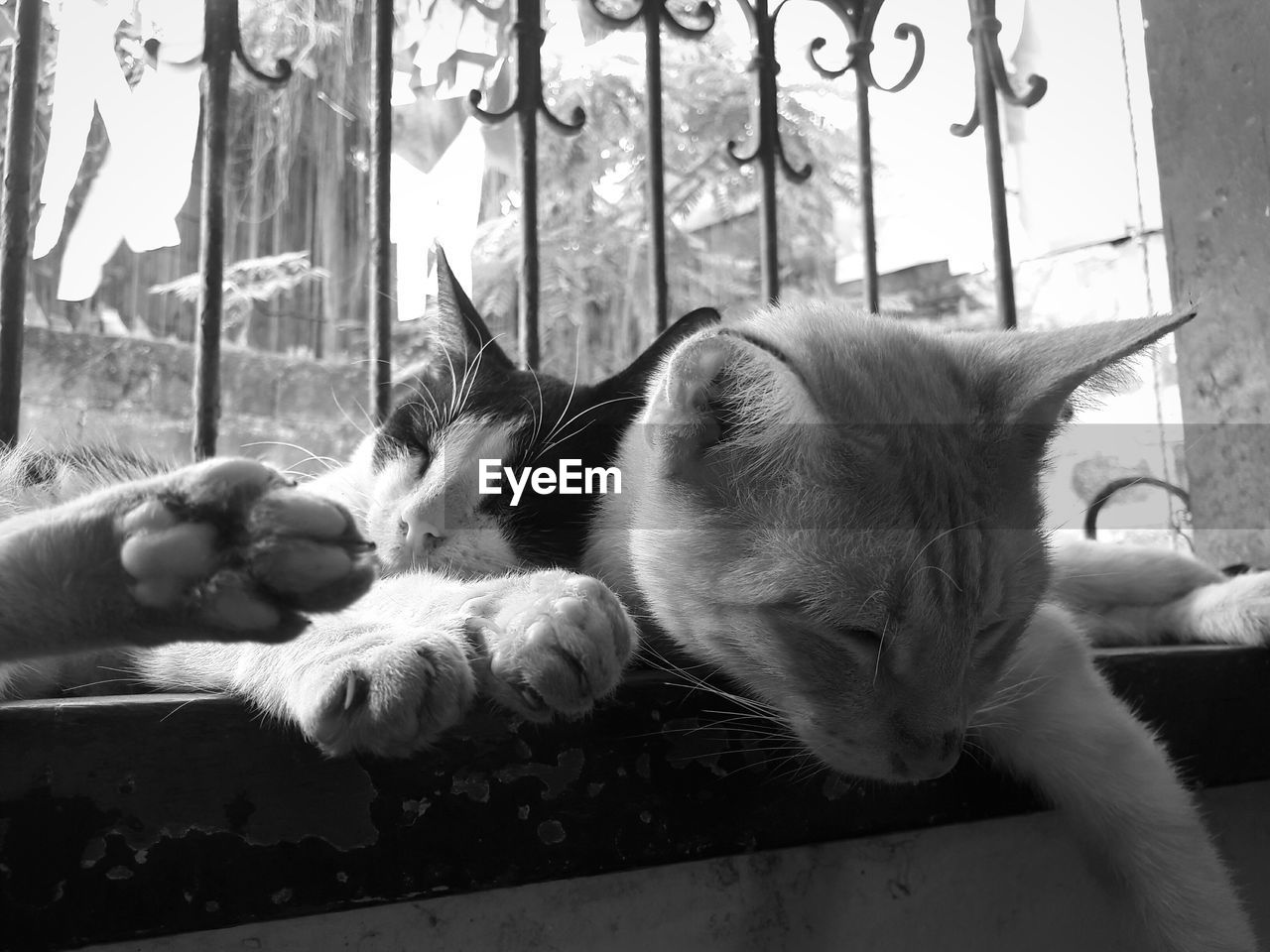 domestic cat, pets, domestic animals, animal themes, mammal, feline, cat, sleeping, no people, lying down, indoors, relaxation, day, close-up
