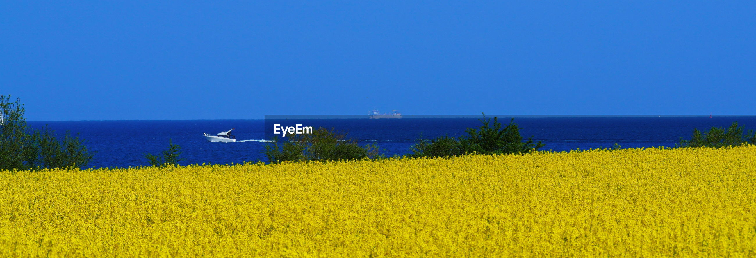 SCENIC VIEW OF YELLOW FLOWERS ON FIELD AGAINST SKY
