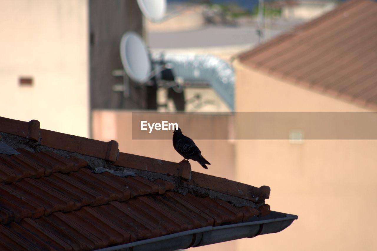 Bird perching on roof