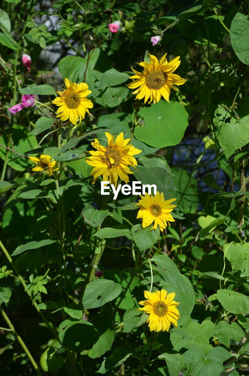 flower, growth, plant, beauty in nature, nature, petal, freshness, fragility, outdoors, flower head, blooming, day, yellow, leaf, no people, close-up