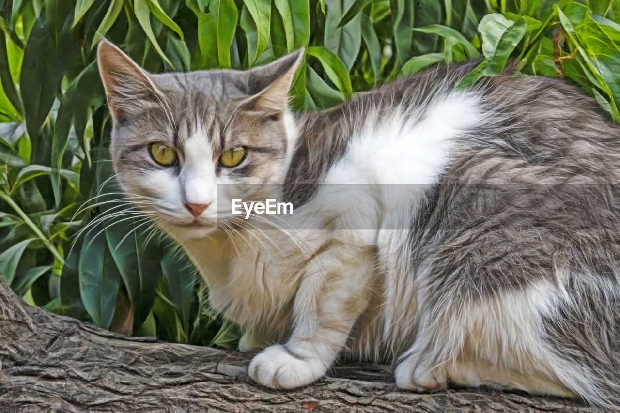 cat, feline, domestic, pets, mammal, animal themes, animal, domestic cat, domestic animals, one animal, vertebrate, portrait, looking at camera, whisker, plant, no people, close-up, day, relaxation, nature