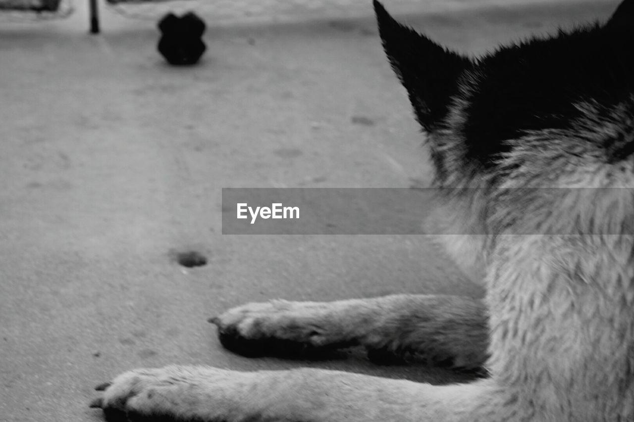pets, domestic cat, domestic animals, animal, mammal, one animal, dog, animal themes, feline, sleeping, paw, indoors, no people, nature, close-up, day