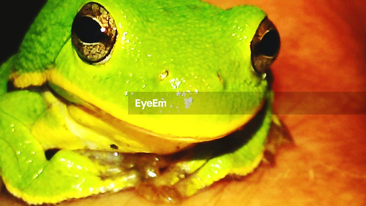 one animal, close-up, animal themes, green color, no people, animals in the wild, nature, reptile, night, outdoors