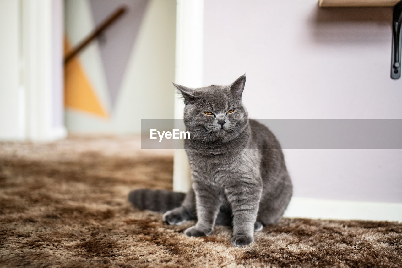 cat, domestic, feline, pets, domestic cat, domestic animals, mammal, animal, animal themes, vertebrate, one animal, no people, sitting, whisker, focus on foreground, day, looking away, relaxation, selective focus, portrait