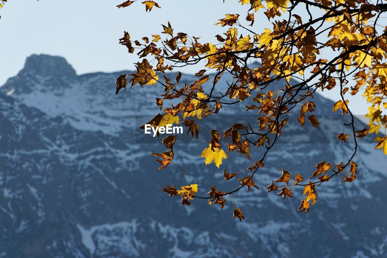 plant, beauty in nature, tree, nature, branch, plant part, growth, leaf, tranquility, autumn, sky, day, change, no people, focus on foreground, winter, outdoors, yellow, scenics - nature, leaves, autumn collection