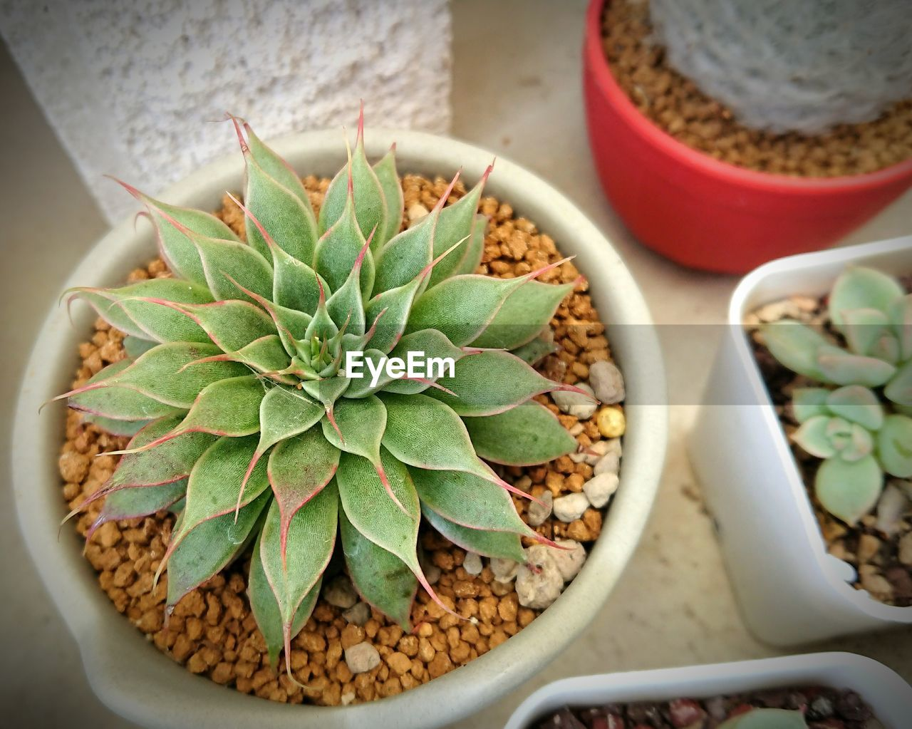 HIGH ANGLE VIEW OF POTTED CACTUS PLANT ON TABLE