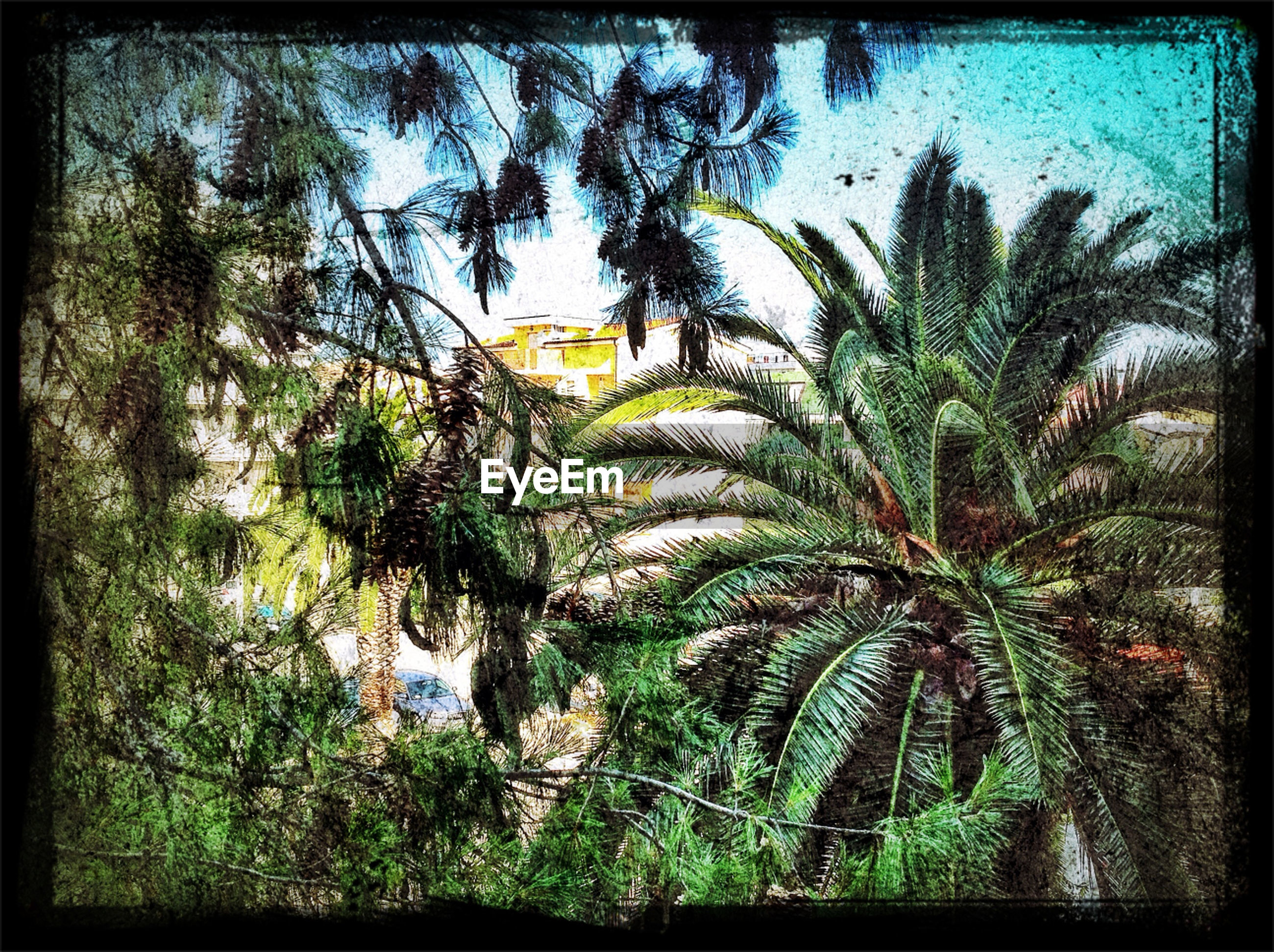 palm tree, tree, growth, transfer print, low angle view, auto post production filter, nature, sky, tranquility, beauty in nature, green color, leaf, palm leaf, branch, tree trunk, plant, day, outdoors, no people, scenics