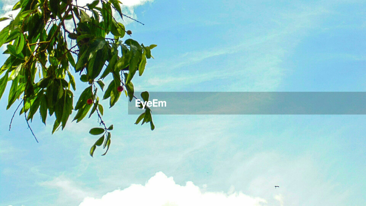 low angle view, sky, growth, nature, no people, day, tree, beauty in nature, outdoors, leaf, cloud - sky, branch