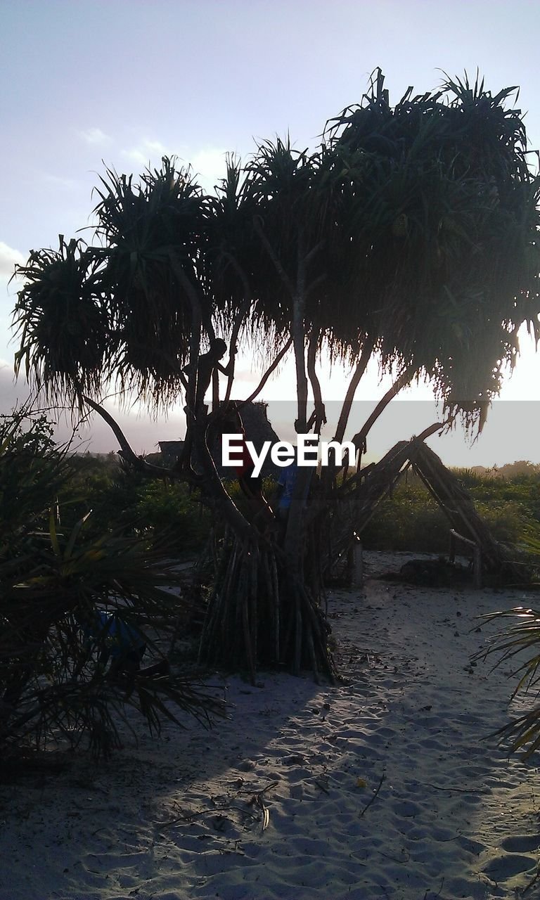 tree, palm tree, growth, nature, beach, outdoors, beauty in nature, day, tranquility, no people, scenics, sky, grass, water