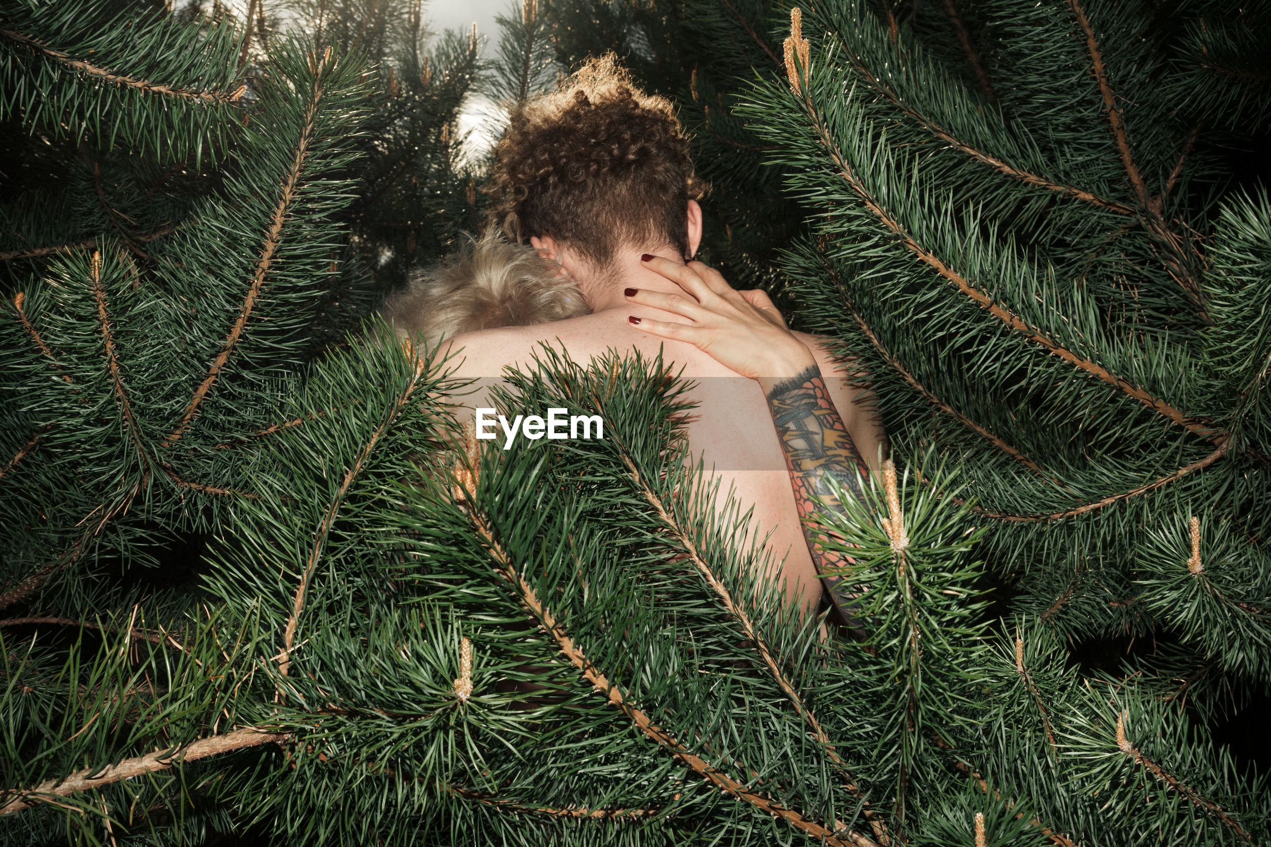 Couple embracing amidst pine trees in forest