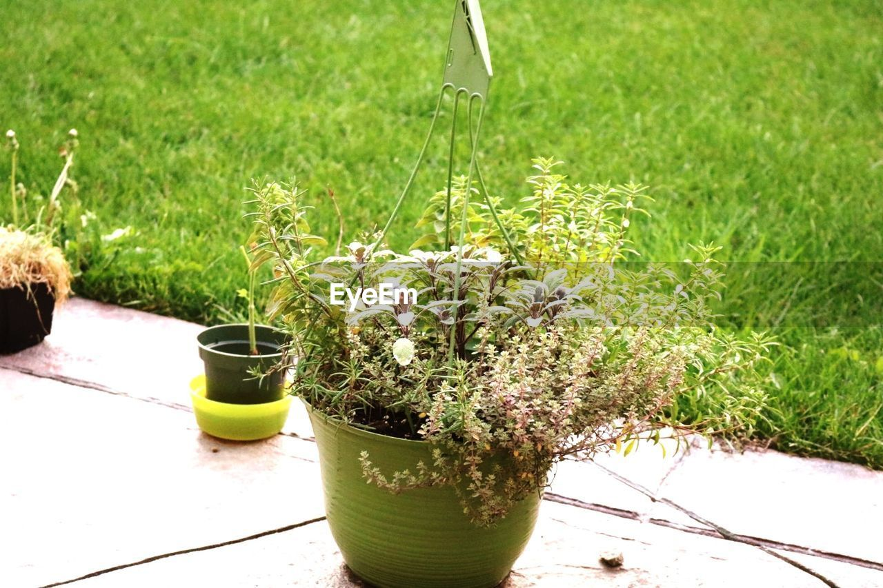 growth, plant, green color, potted plant, nature, outdoors, grass, day, no people, beauty in nature, flower, close-up, freshness