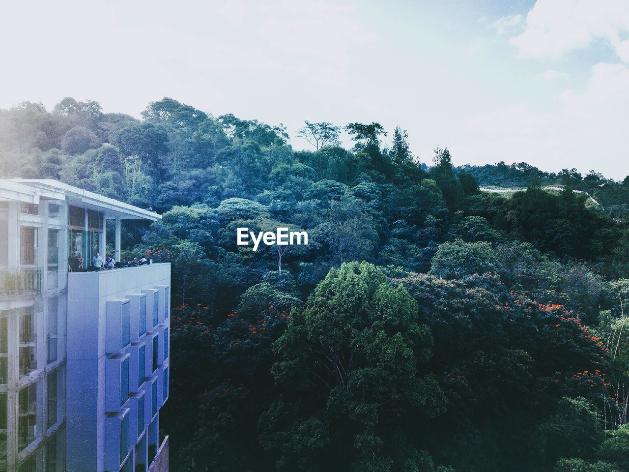 Building by trees growing on hill against sky