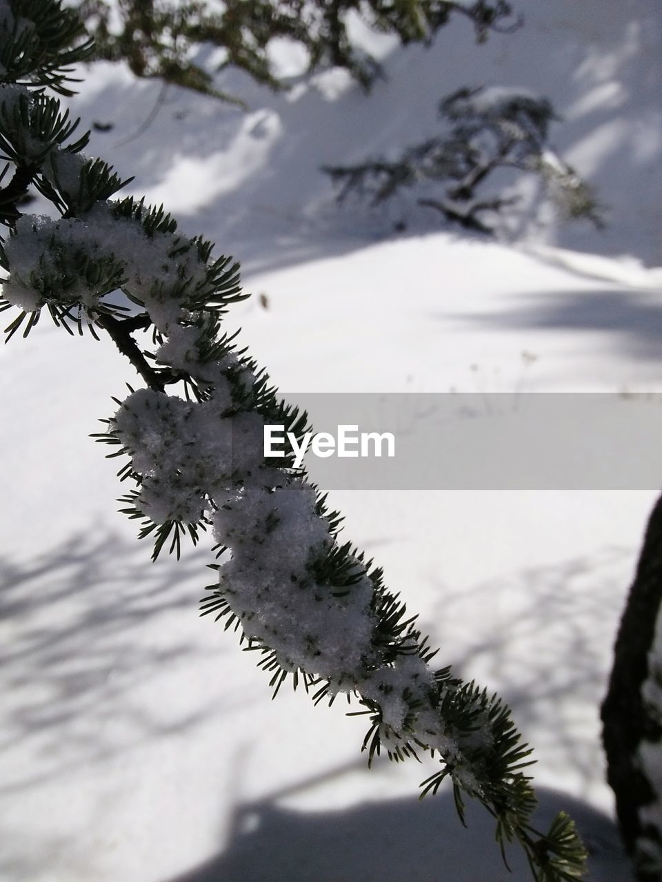 nature, winter, day, tree, cold temperature, outdoors, beauty in nature, focus on foreground, no people, branch, snow, tranquility, water, sky, close-up, scenics
