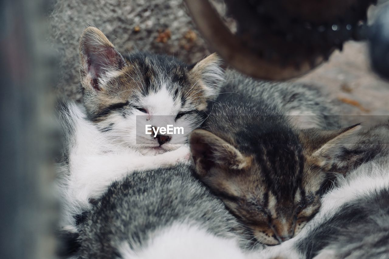 animal themes, mammal, animal, domestic, pets, domestic animals, domestic cat, group of animals, cat, feline, vertebrate, young animal, selective focus, kitten, relaxation, togetherness, two animals, sleeping, no people, whisker, animal family, animal head, care