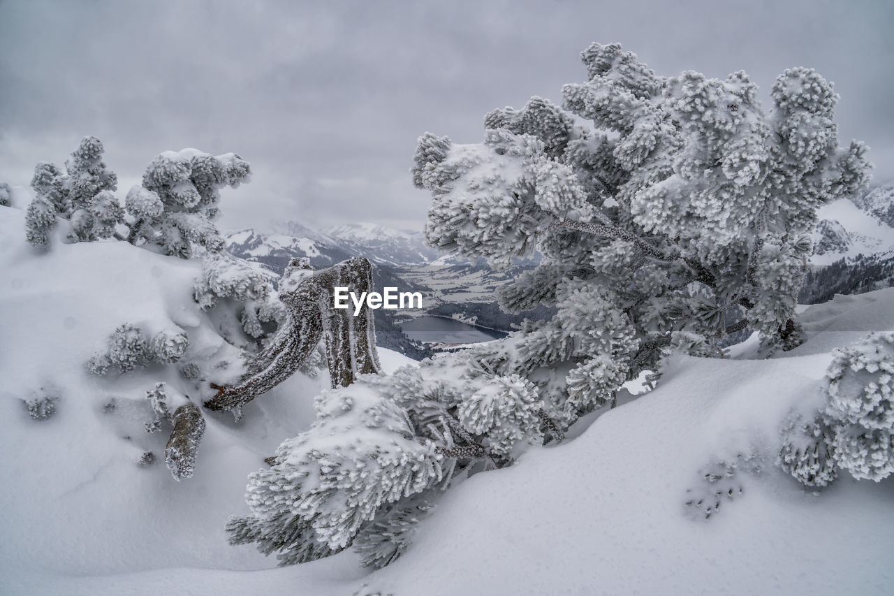 snow, winter, cold temperature, tree, beauty in nature, plant, sky, nature, covering, tranquility, cloud - sky, tranquil scene, scenics - nature, no people, day, white color, frozen, land, non-urban scene, extreme weather, snowcapped mountain, coniferous tree, powder snow