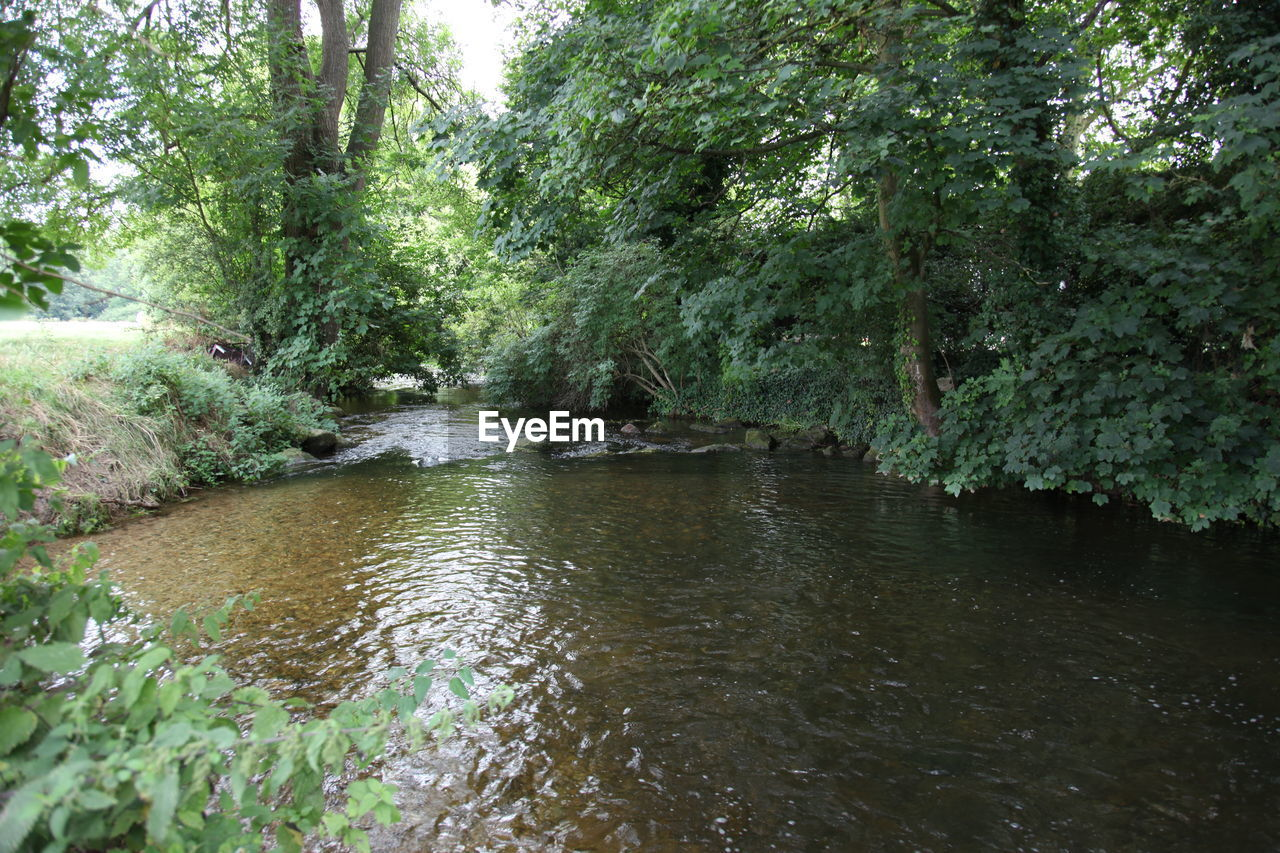 tree, plant, water, forest, nature, river, land, beauty in nature, tranquility, growth, no people, day, environment, flowing water, outdoors, scenics - nature, foliage, green color, lush foliage, flowing, stream - flowing water, shallow