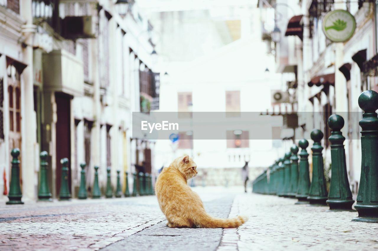 Stray Cat On Street In City