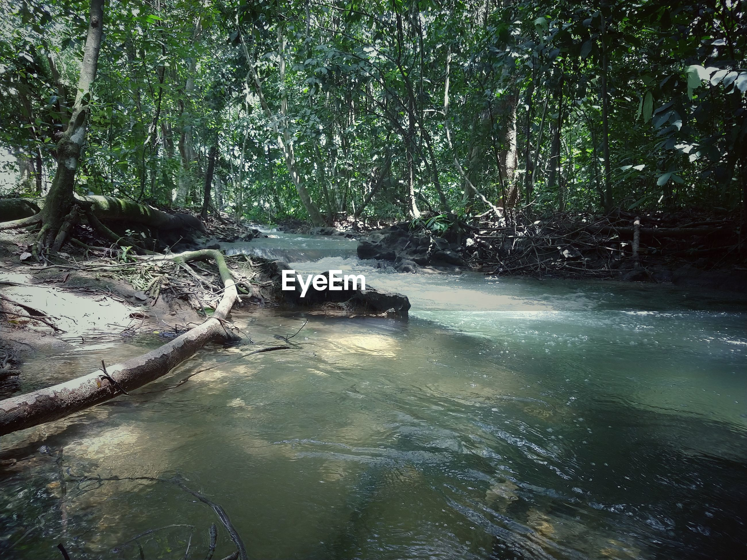 RIVER FLOWING THROUGH FOREST
