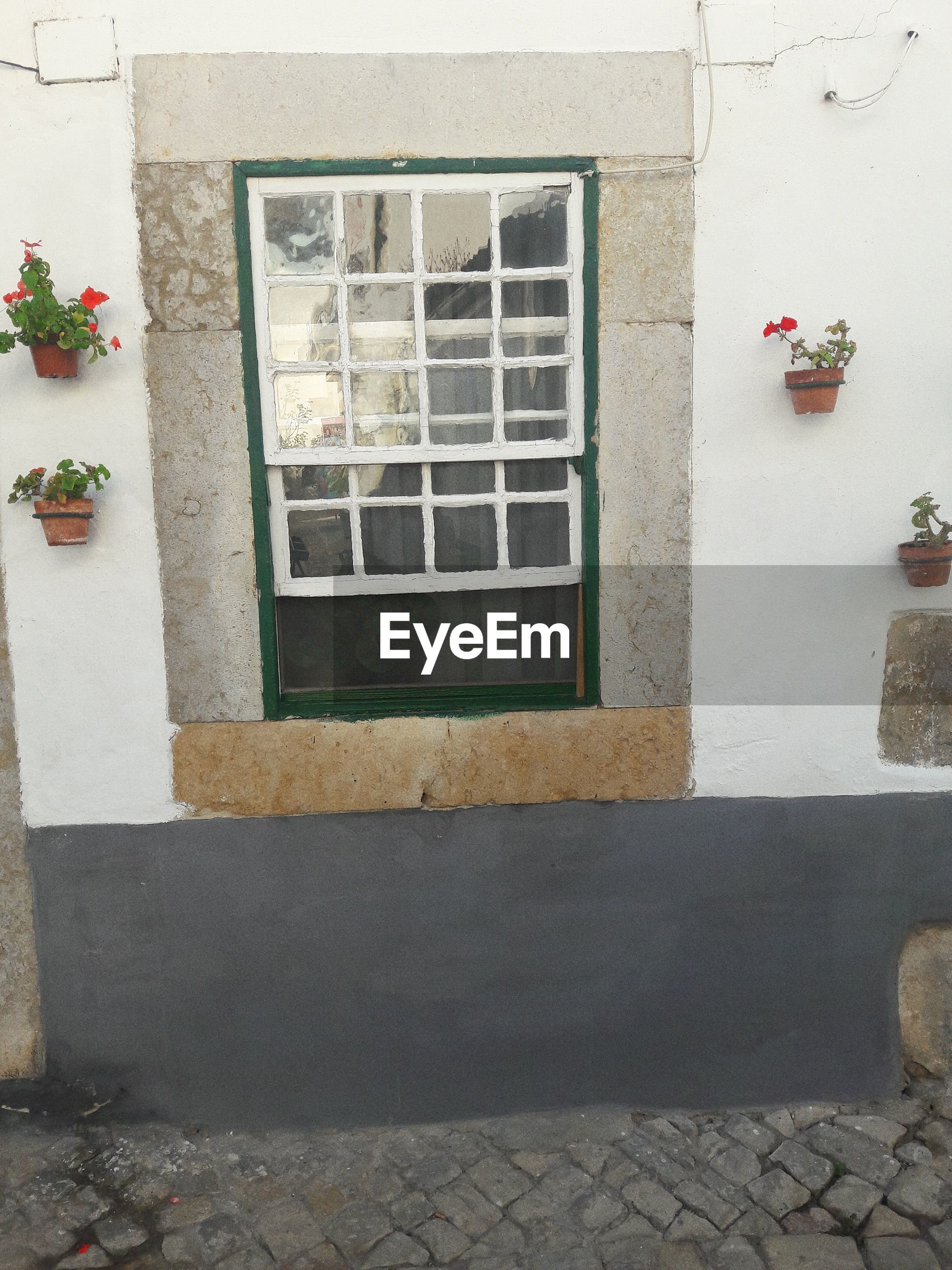 Potted plants hanging by window