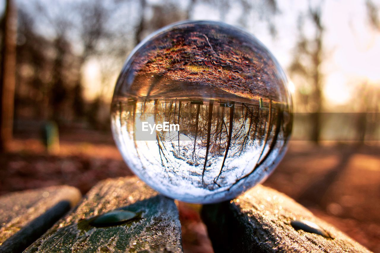 sphere, reflection, nature, close-up, tree, focus on foreground, day, crystal ball, ball, outdoors, no people, glass - material, sunlight, plant, shape, geometric shape, selective focus, sky, transparent, single object