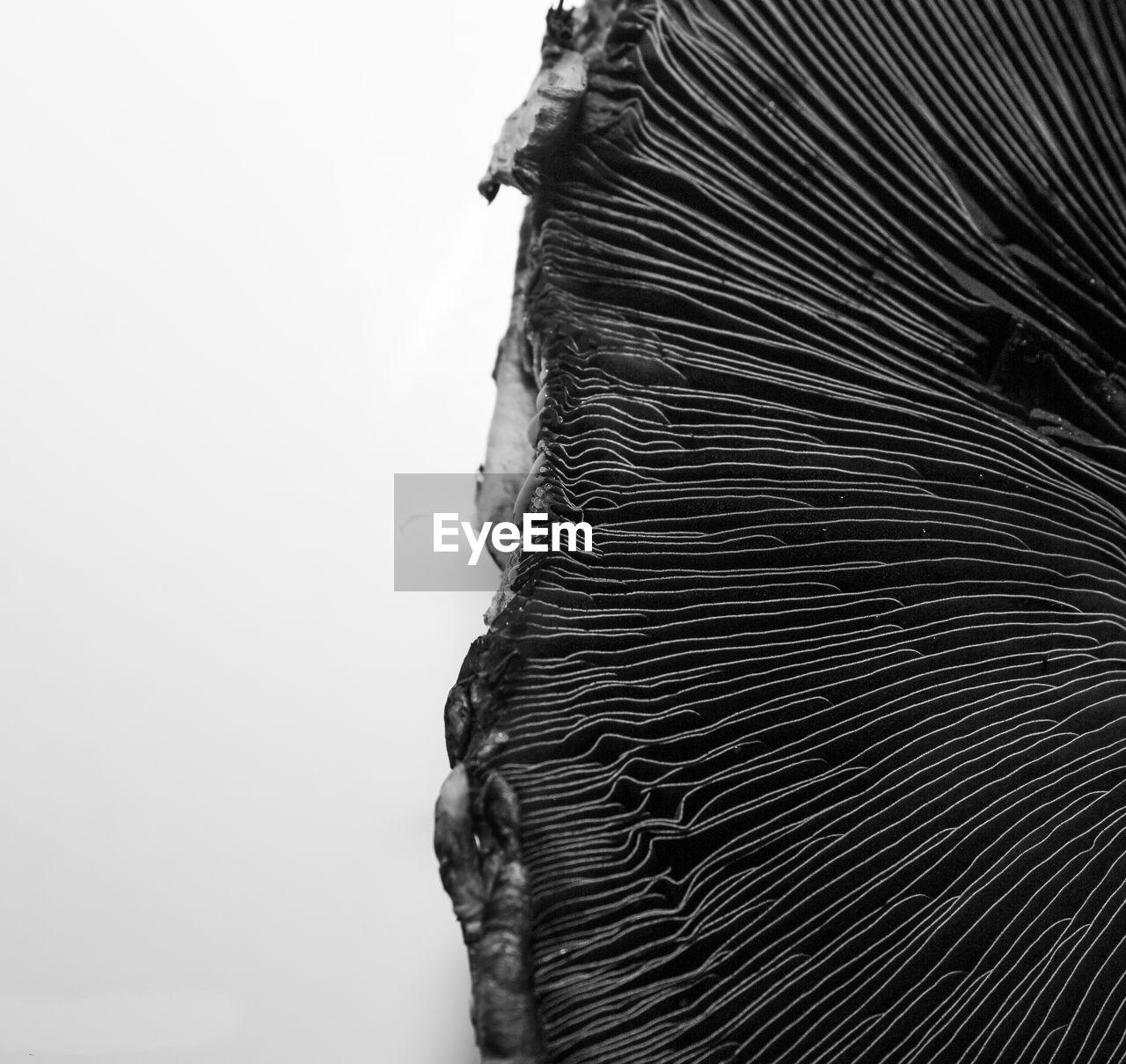 Close-Up Of Mushroom Against White Background