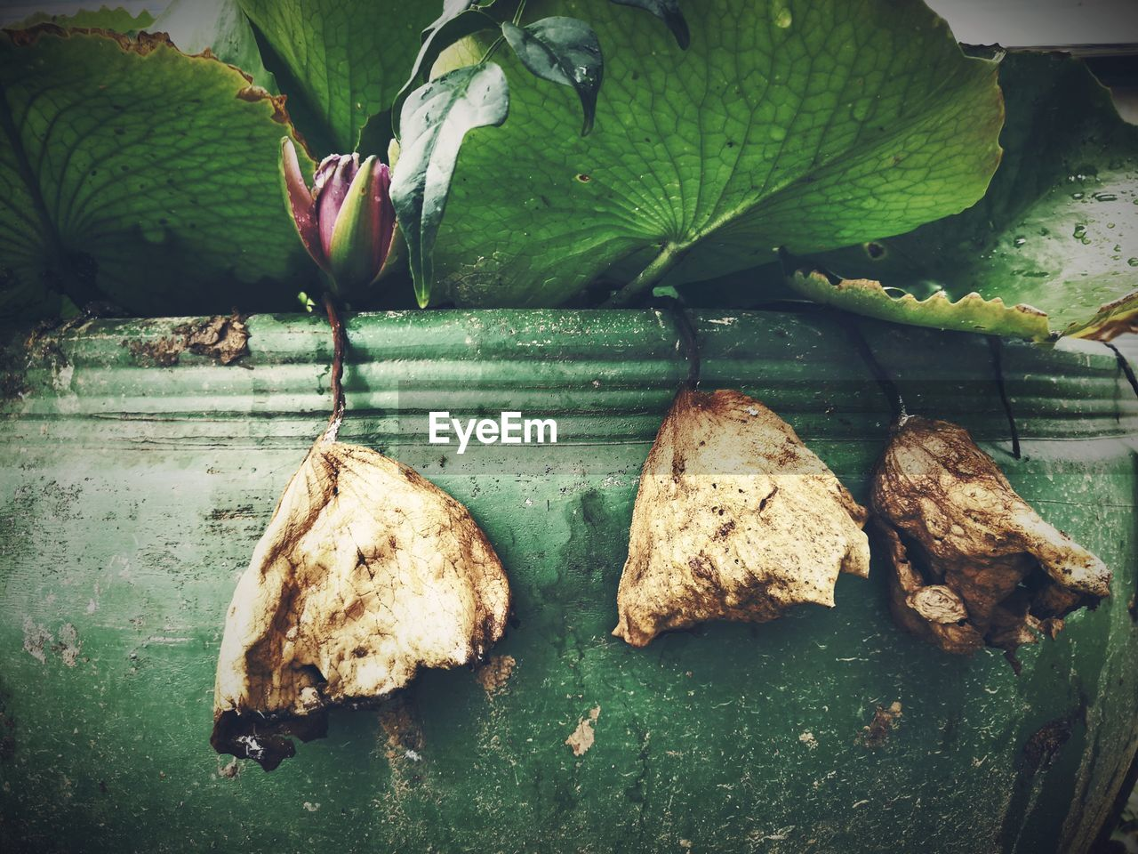 leaf, plant part, food and drink, food, close-up, no people, healthy eating, freshness, green color, nature, wellbeing, day, plant, outdoors, fruit, high angle view, beauty in nature, leaves, growth