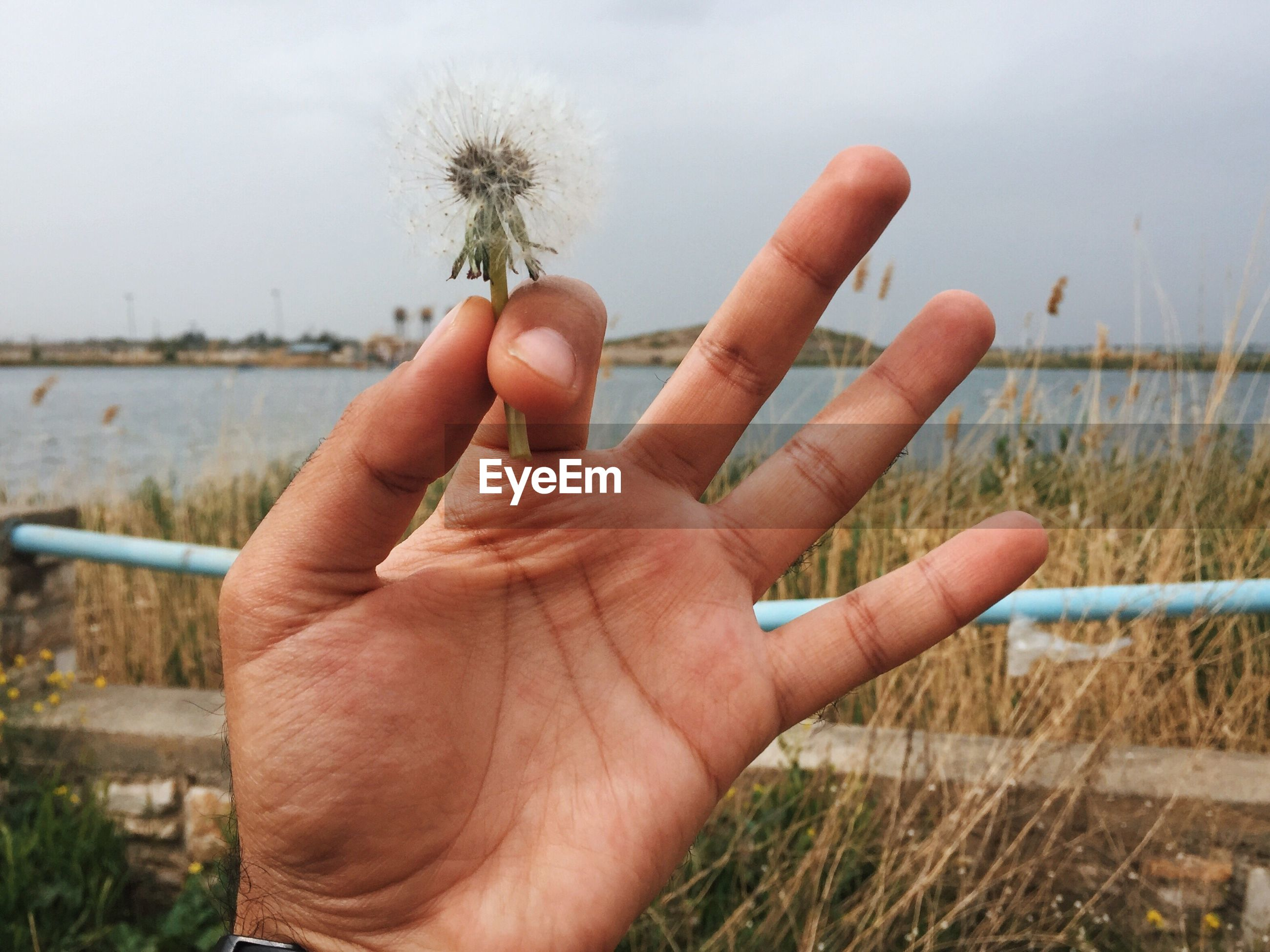 Close-up of hand holding plant by lake against sky