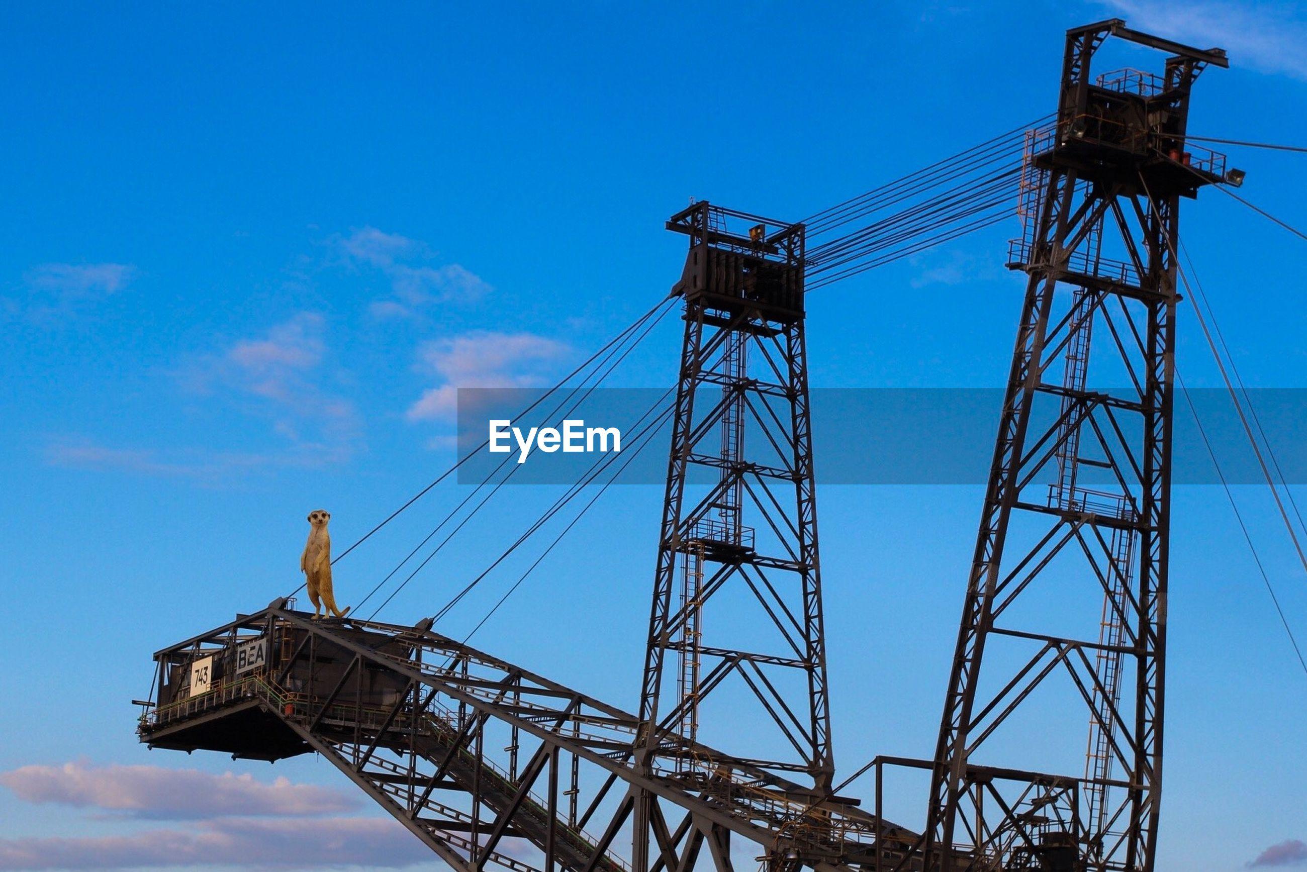 Meerkat on crane against blue sky