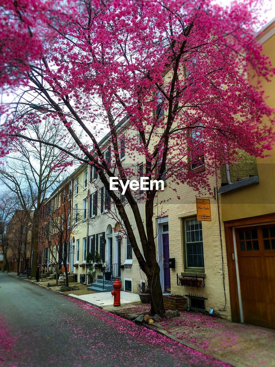 tree, flower, building exterior, architecture, built structure, branch, growth, blossom, nature, outdoors, no people, pink color, springtime, day, beauty in nature, sky