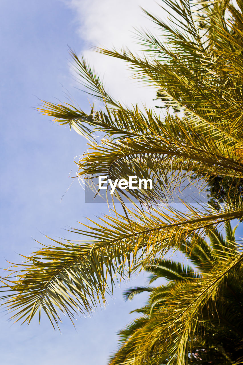 growth, tree, nature, low angle view, beauty in nature, no people, branch, day, close-up, green color, outdoors, sky, palm tree, freshness