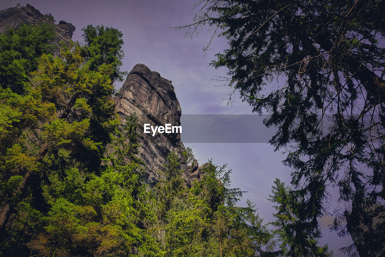 tree, plant, sky, low angle view, beauty in nature, growth, tranquility, nature, rock formation, rock, no people, tranquil scene, day, non-urban scene, scenics - nature, mountain, rock - object, green color, solid, land, outdoors, formation, eroded