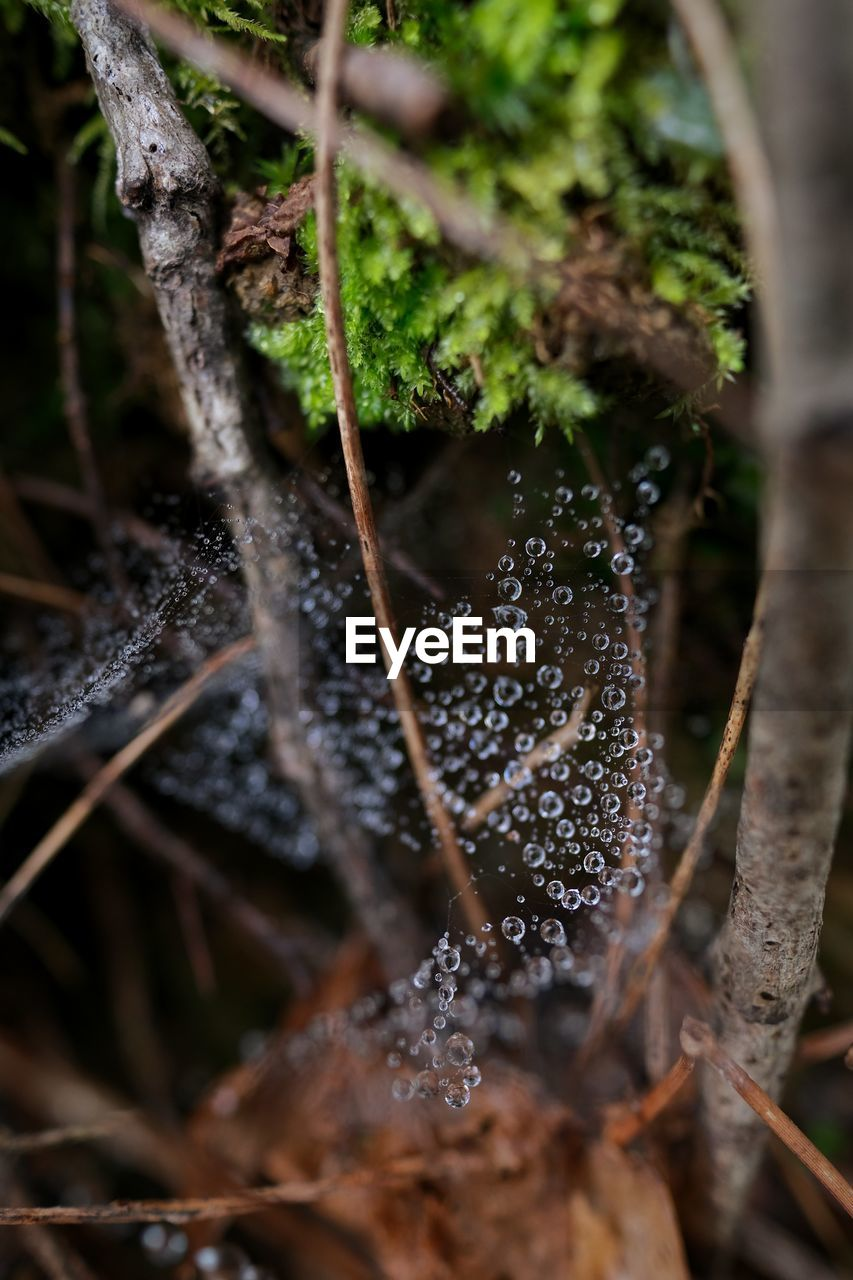 Close-up of wet mushroom growing in forest and spider web covered by raindrops