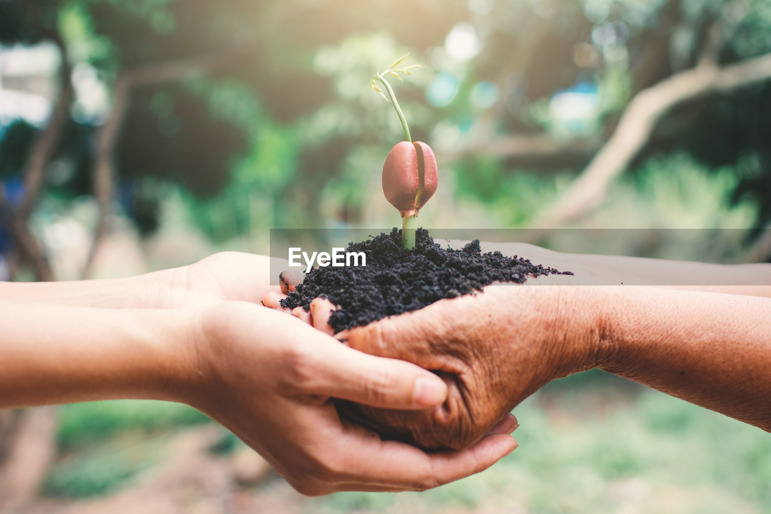 Cropped hands of people holding seedling