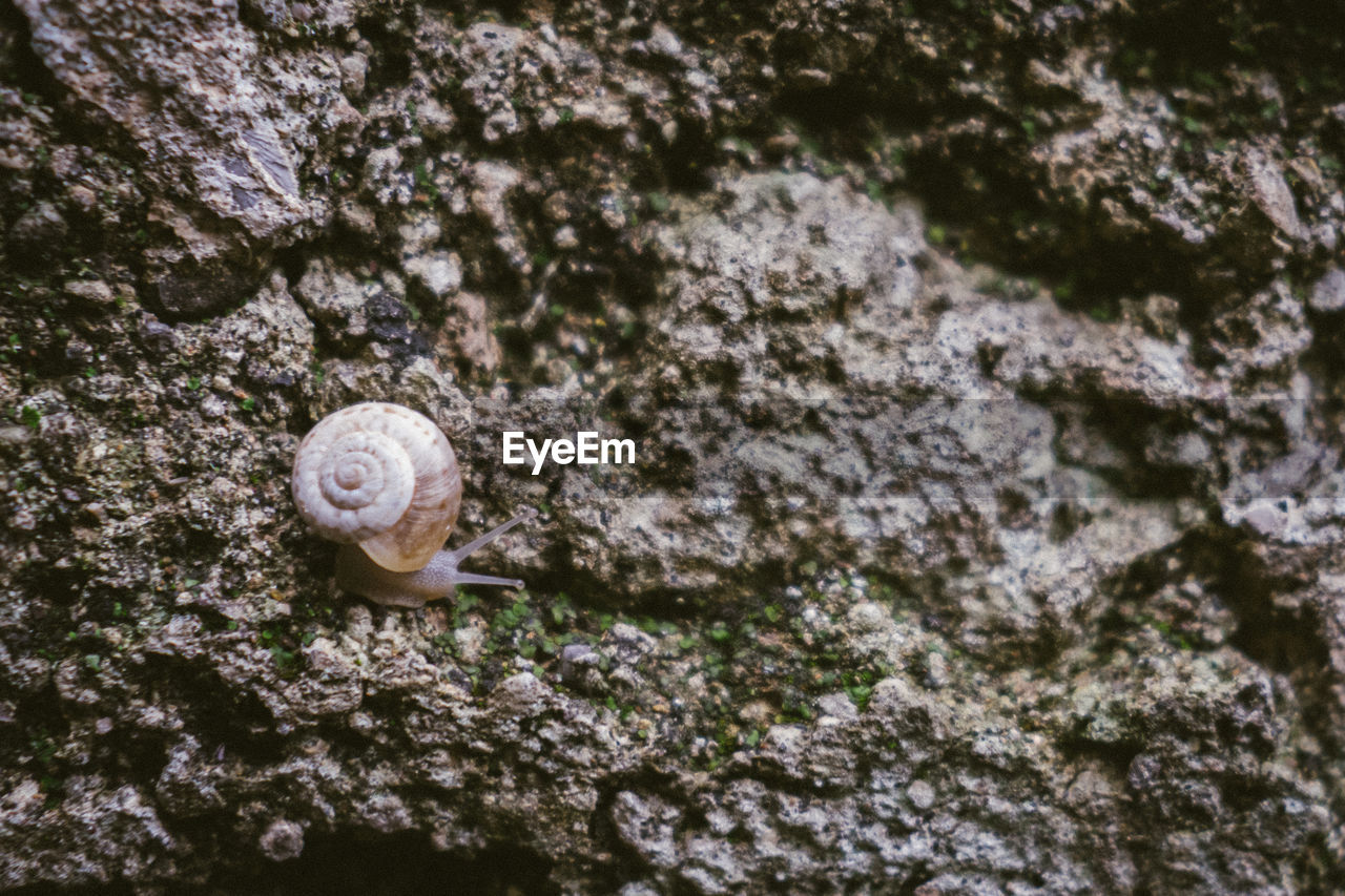 shell, mollusk, animal themes, animal shell, animal, gastropod, one animal, animal wildlife, textured, snail, close-up, invertebrate, animals in the wild, no people, day, rock, rock - object, nature, rough, solid, outdoors