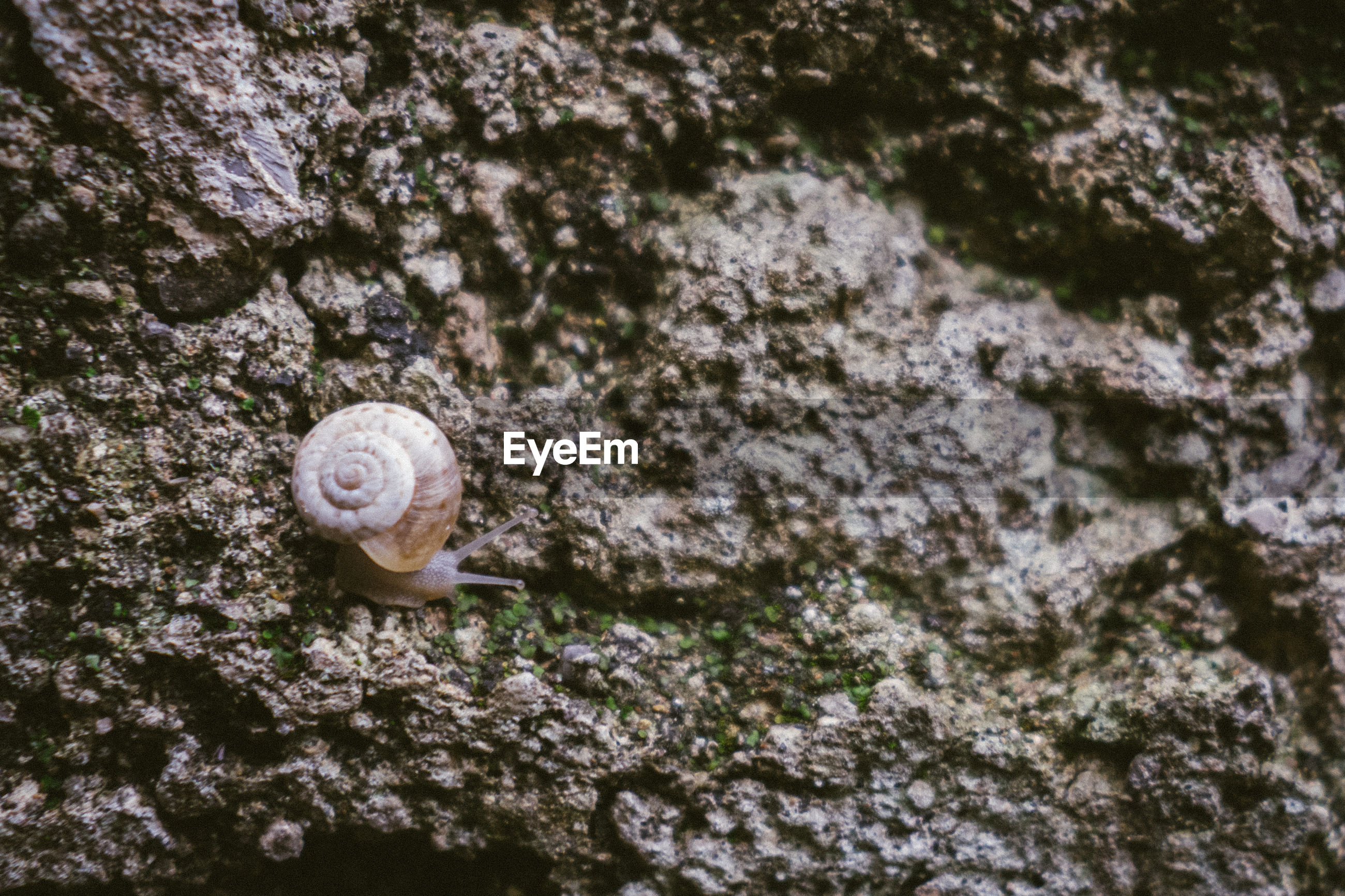 CLOSE-UP OF SNAIL IN ROCK