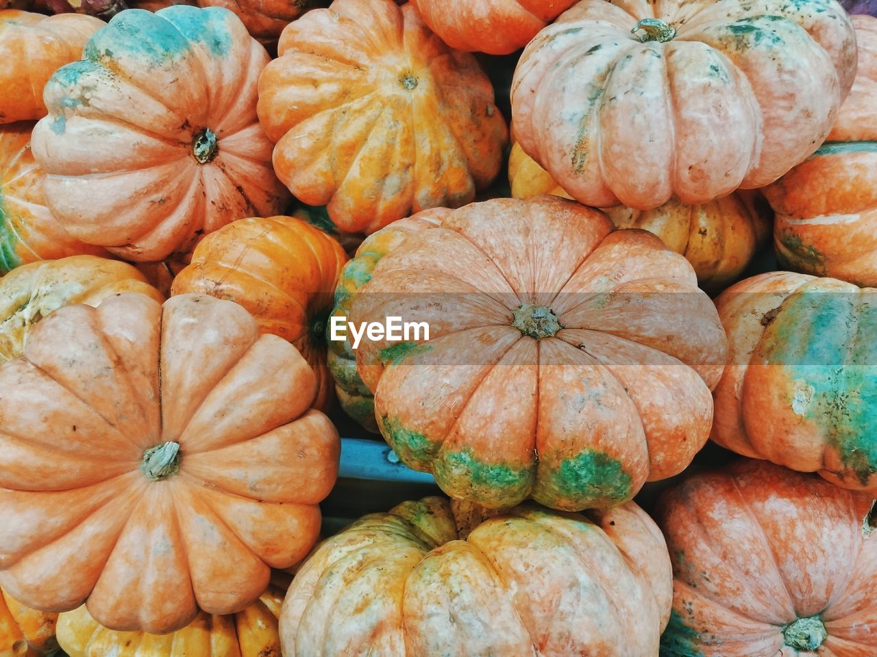 Full frame shot of pumpkins
