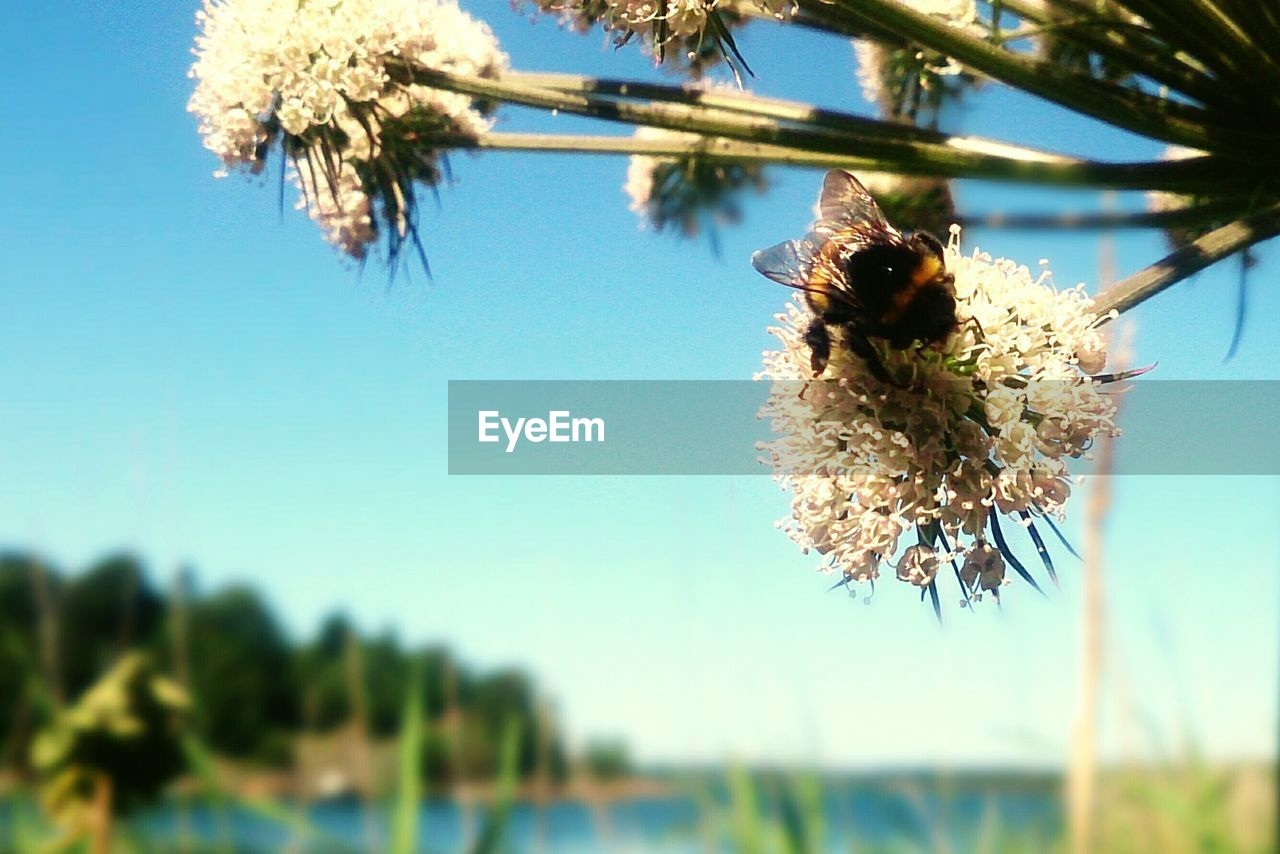 flower, nature, fragility, beauty in nature, growth, tree, focus on foreground, plant, freshness, no people, day, close-up, flower head, branch, petal, springtime, low angle view, outdoors, hanging, catkin, sky, clear sky, blooming