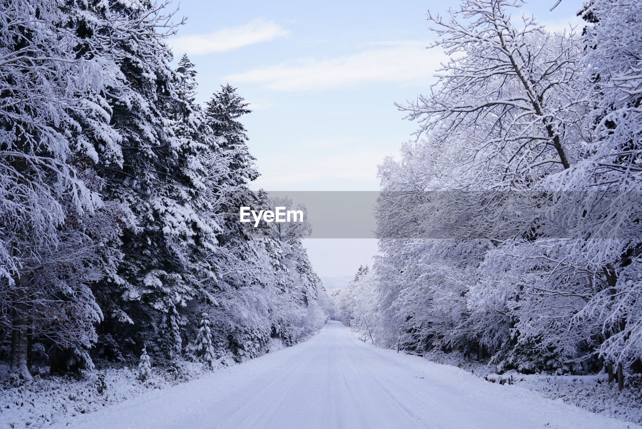 Snow covered street by trees against sky