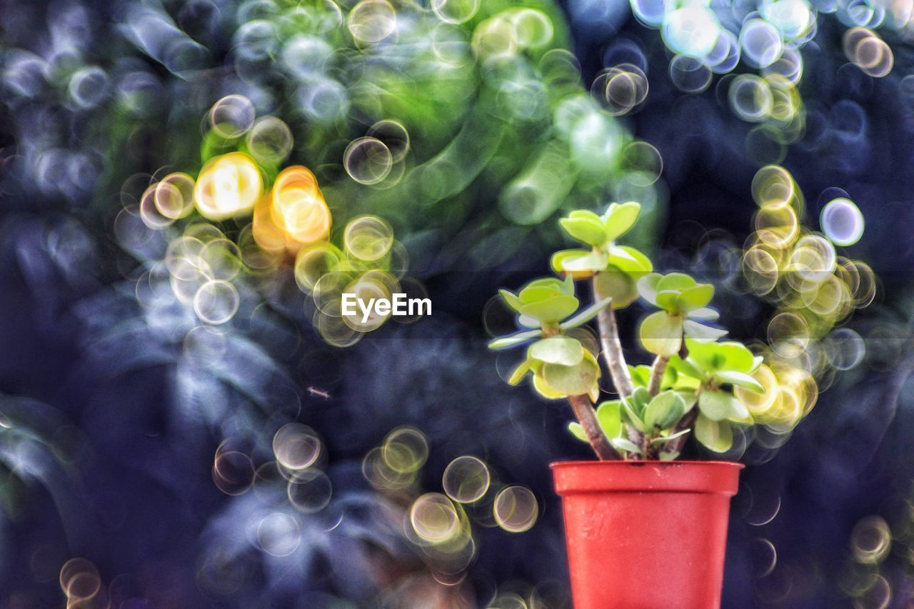 potted plant, plant, no people, plant part, growth, leaf, nature, green color, close-up, day, beauty in nature, indoors, vulnerability, high angle view, freshness, plastic, fragility, focus on foreground, pattern, flower pot