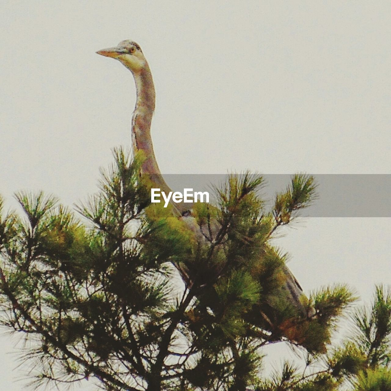 animals in the wild, animal themes, one animal, bird, animal wildlife, tree, no people, nature, day, low angle view, outdoors, beak, clear sky, sky