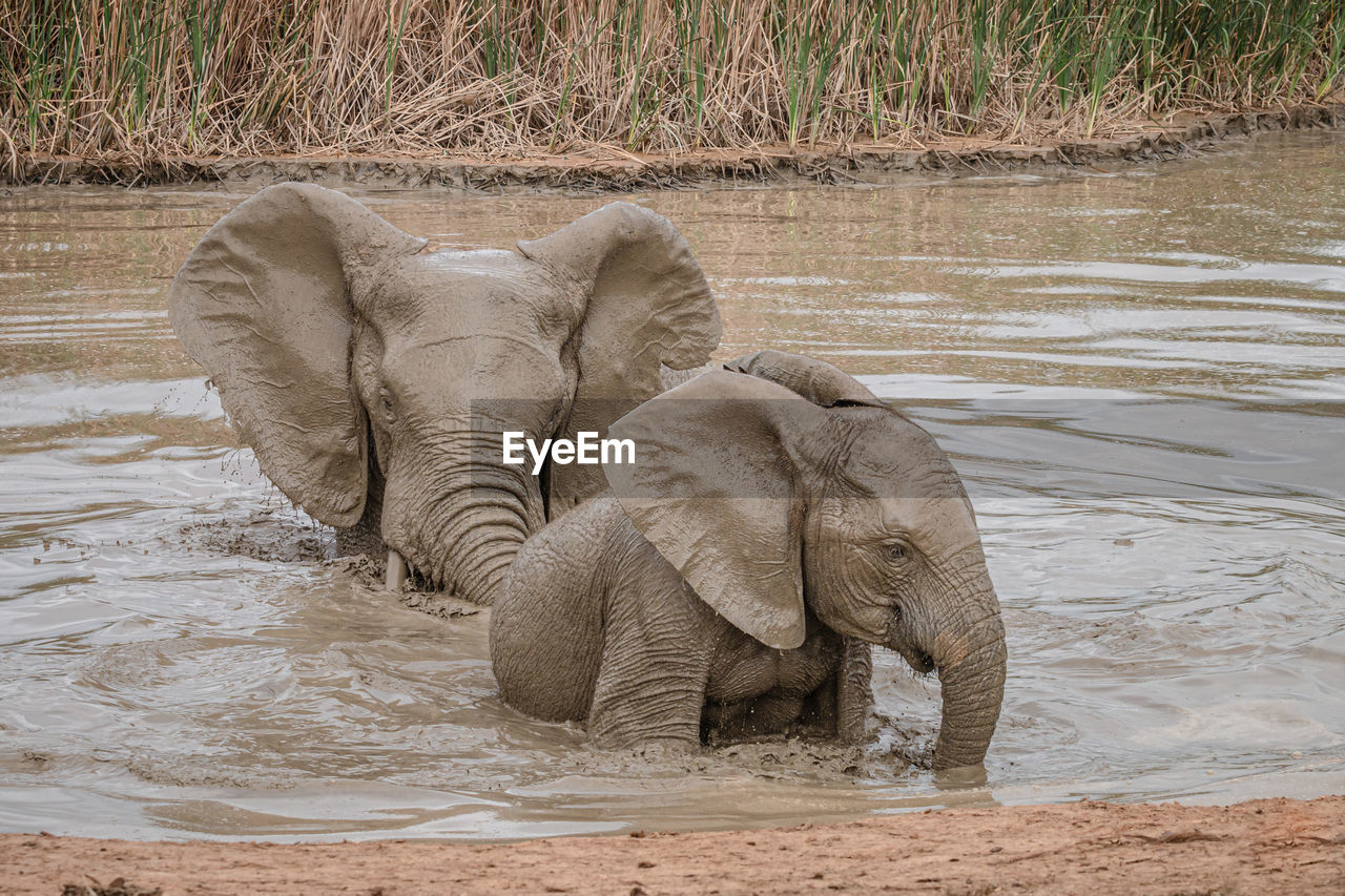VIEW OF ELEPHANT IN WATER ON LAND