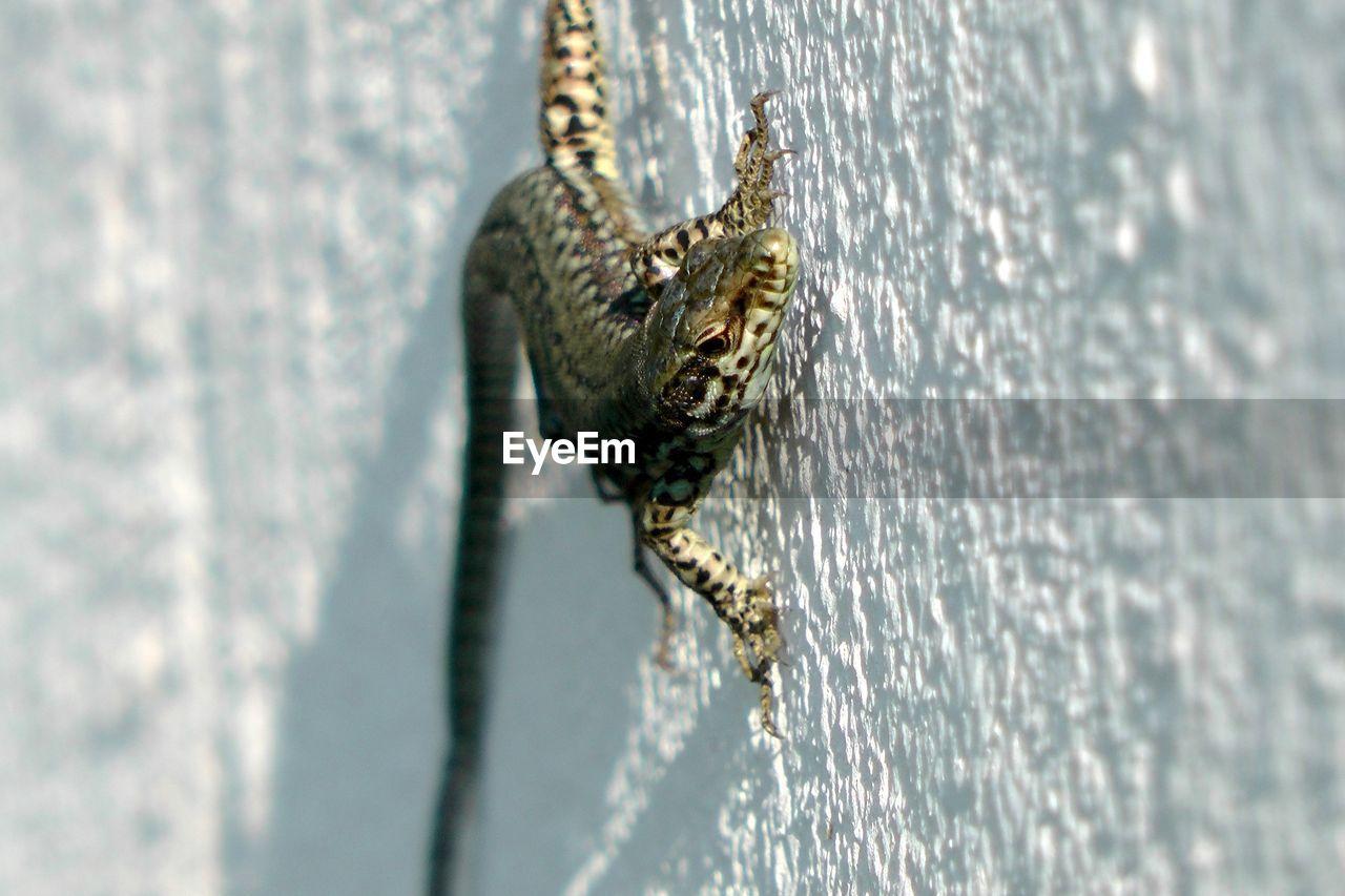 Close-Up Of Lizard Crawling On Wall