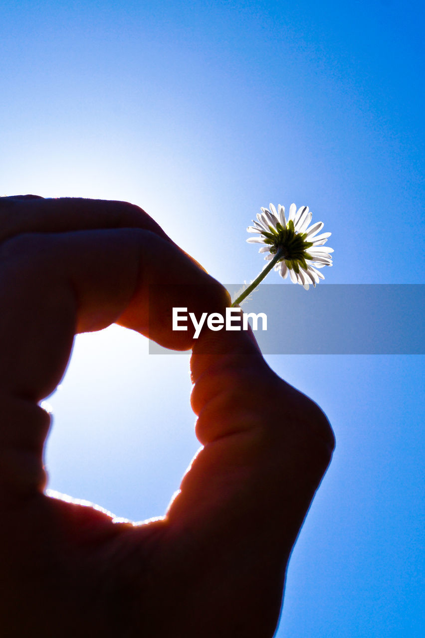 Cropped image of person holding flower against sky